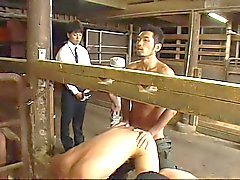 ( New Sexual ) Homosexuell Milch Land -02