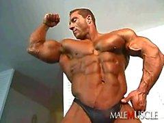 Muskel pro bb