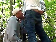 Петух сосание В лесу