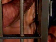 UDE dei Boxer Manu Maltes in gabbia
