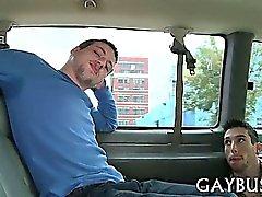 Дикий петуха езды в автомобиле