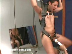 Suspended and Milked